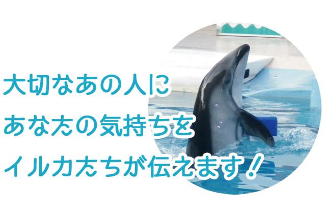 下田海中水族館のサプライズの画像