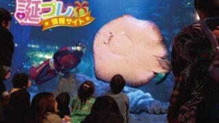 品川水族館に誕生日はとくにカップルにおすすめなスポット