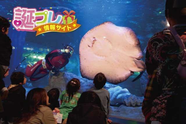 品川水族館の画像