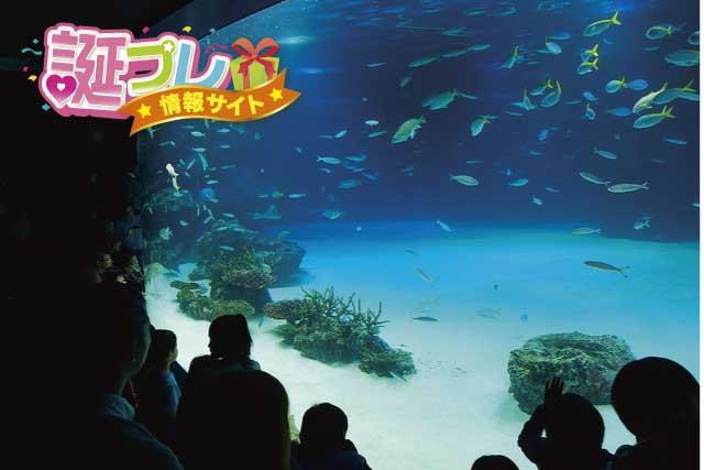 サンシャイン水族館の画像